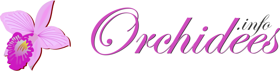 Le site web des ▷▷ ORCHIDÉES ◁◁