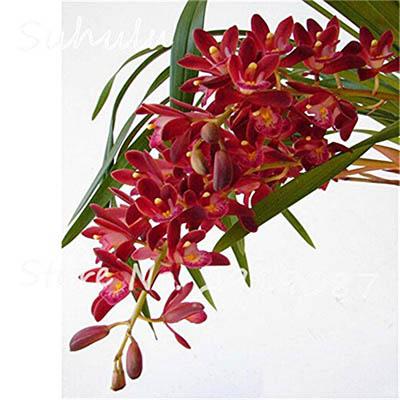 Belles graines de fleurs biologiques 120seeds / sac de graines d'orchidées rares graines de fleurs bonsaï naturel, grandir plantes pour le jardin à la maison facile à cultiver 24