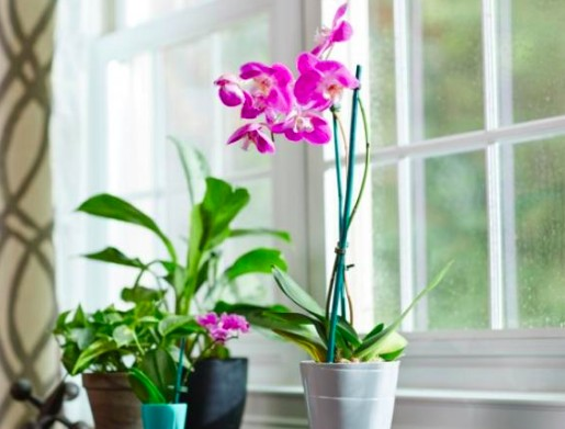 entretien et soin orchidées - eclairage