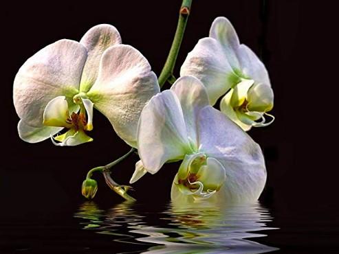 entretien et soin orchidées - arrosage et irrigation