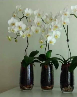 entretien et soin orchidées - humidité
