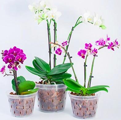 empotage orchidée