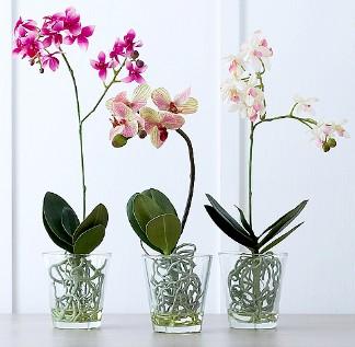 pot pour orchidées