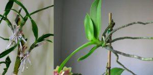 Comment reproduire des orchidées
