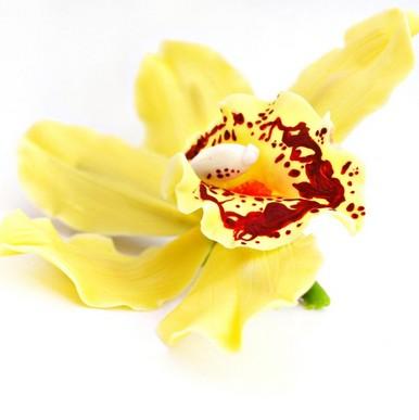 orchidée jaune cambria