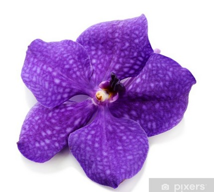 photo orchidées violettes
