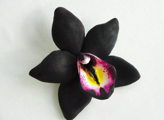 Cultiver des orchidées noires